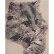 Mister Whiskers Stretched Wall Tapestry