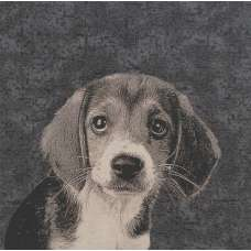 Puppy Dog Eyes Stretched Wall Tapestry